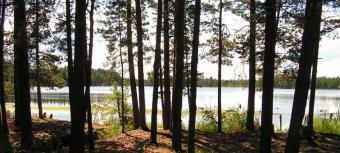 Slokas ezers - Kūdra