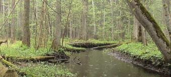 Melnalkšņu dumbrāja laipa un Meža taka