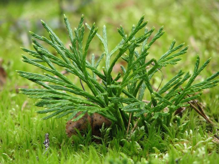 Retie mežu augi