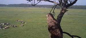 No augstā koka cauri vasarai