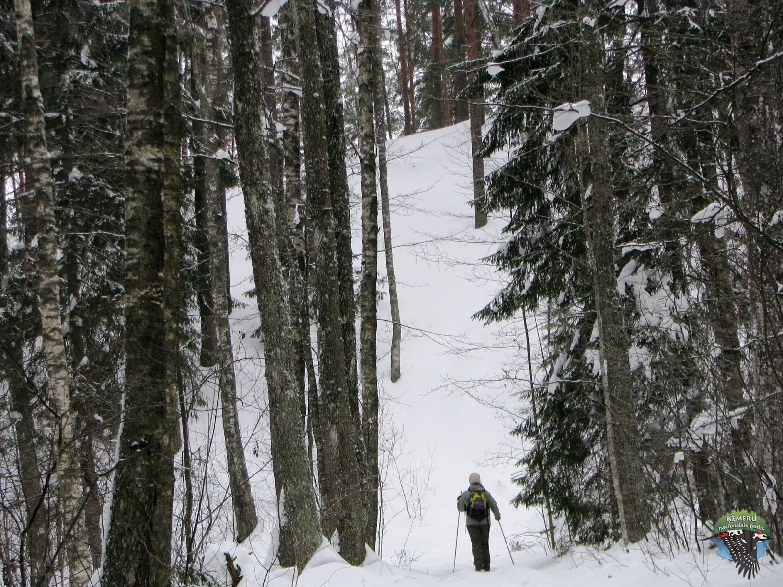 Zalā kāpa no Ķemeru puses. Foto: Agnese Priede