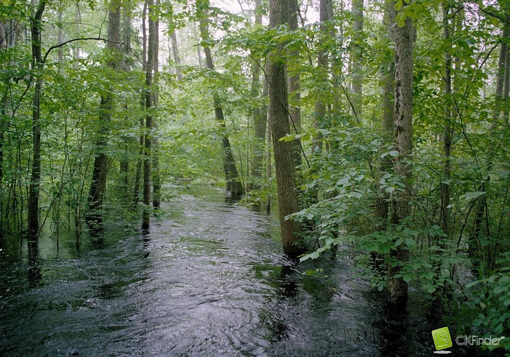 Vēršupītes plūdi. Foto: Jānis Ķuze.